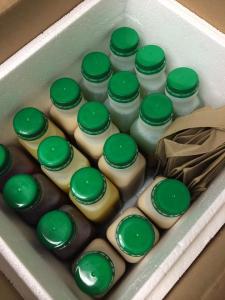 "3 day ""Juice Juice"" Cleanse"